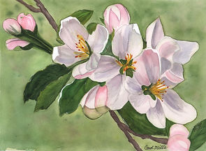 CarolMills-Apple Blossoms-Watercolor.jpg