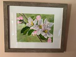 CarolMills-Apple Blossoms -watercolor fr