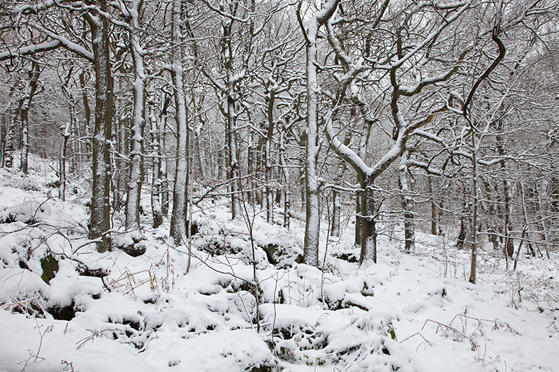 Yanncliff Wood