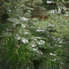 blader-regn.jpg