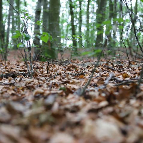 skogsbunn.jpg