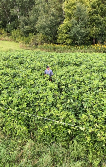 Zac from east central Minnesota shows his Eagle Forage Soybean plot