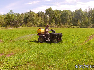 Controlling grasses and broadleaf weeds in clover plots.