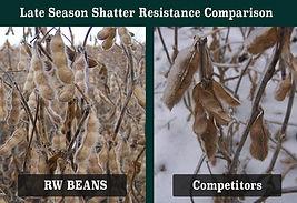 Real World Shatter Resistance Comp.jpg