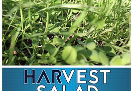 RWWP Harvest Salad Logo.jpg