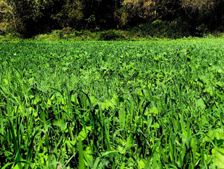 Food Plot Supplies & Sources