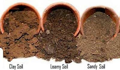 Thee different soil types:  Clay, loamy, and sandy.