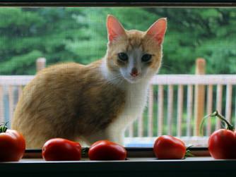 Looking Through My Kitchen Window