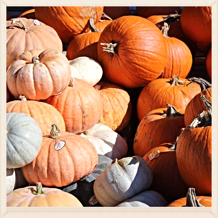Pumpkins for Sale at Tractor Supply