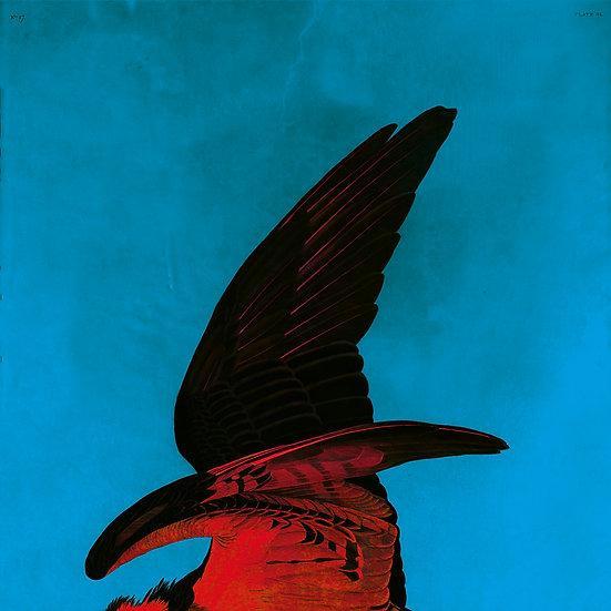 The Audubon Wing