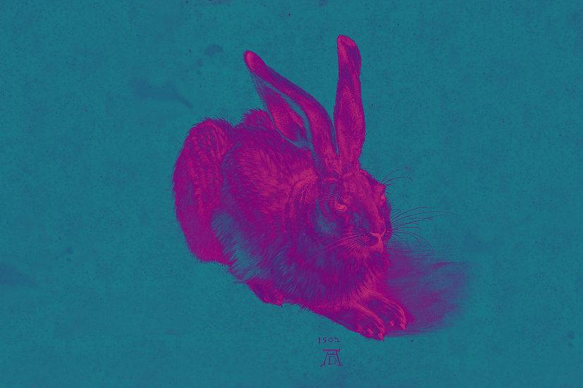 Duerer's Hare