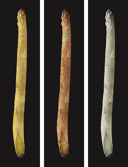 Metallic Asparagus Triptych