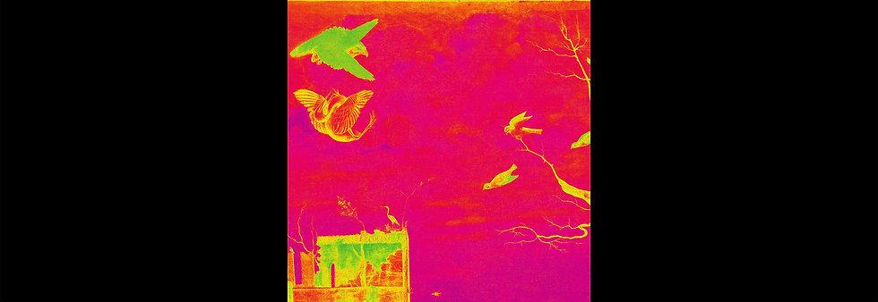 Happy Birds XXL Special Edition