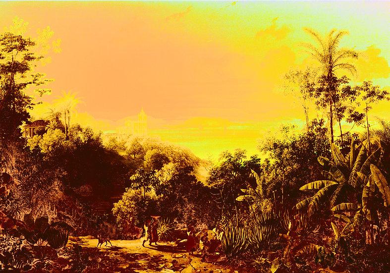 Tropical Landscapes 5