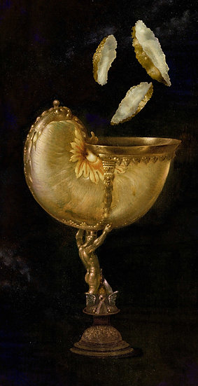 The Opulent Nautilus