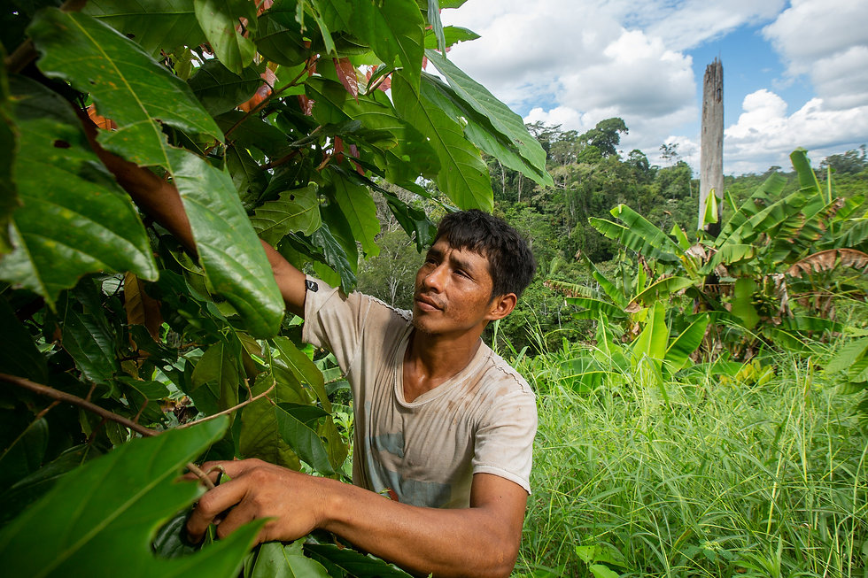 The Role of Agroforestry Systems in the Decade of UN Ecosystem Restoration [S-11]