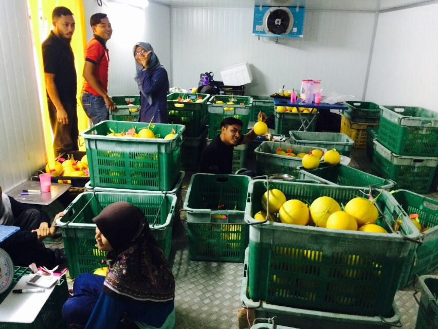 Melon Manis Terengganu