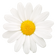 justDAISY.png