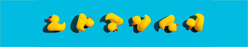 AdobeStock_225177993_mixed up ducks.jpg