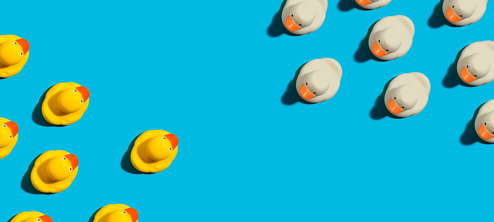 AdobeStock_215254721_ducks in battle.jpg