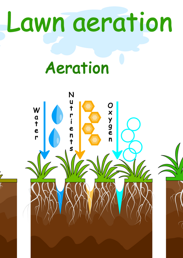 Lawn aeration_317961249.png