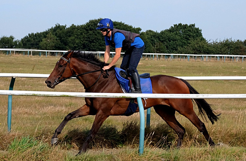 Pendo and Louie on the gallops