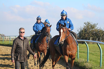 John Best and horses on the gallops