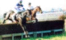 Point to Point Racehorses from John Best Racing