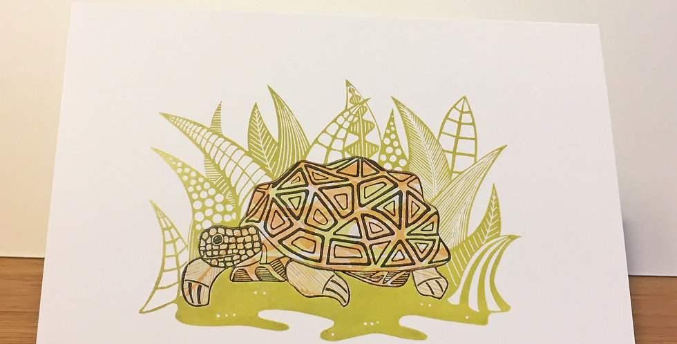 Clive the tortoise