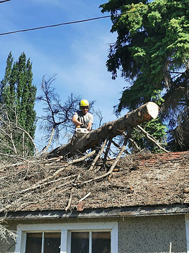 Dangerous Tree Removal.jpg