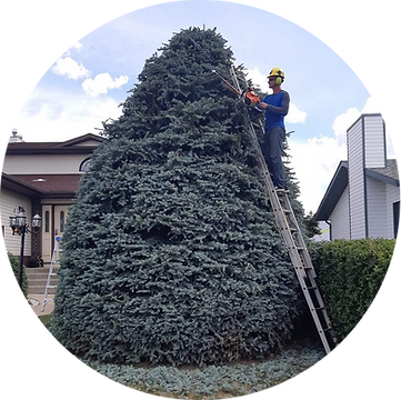 Tree Trimming.png