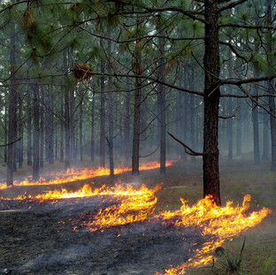 WINLAW PRESCRIBED BURN MEETING  PLANNED FOR - MARCH 14TH 2018