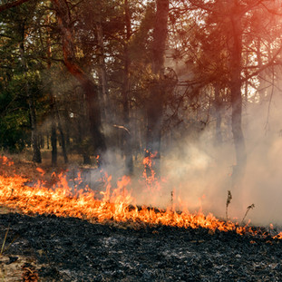 NEW DENVER WILDFIRE PROTECTION GETS A BOOST - OCTOBER 12TH 2016