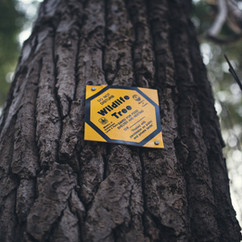 MARKED WILD LIFE TREE