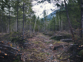 Wildland-Urban Interface Wildfire Protection Program gets another $75,000