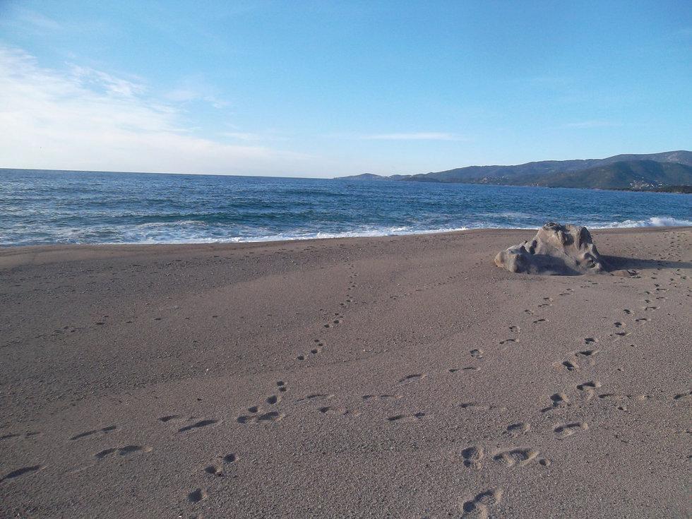 pas dans le sable.jpg