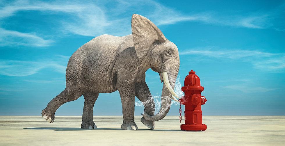Elephant fire hydrant.jpg