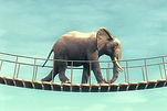 Elephant%20on%20bridge_edited.jpg