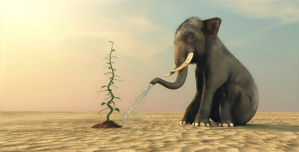 Elephant%20watering%20plant_edited.jpg