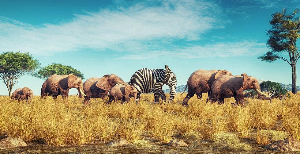 Zebra elephant.jpg