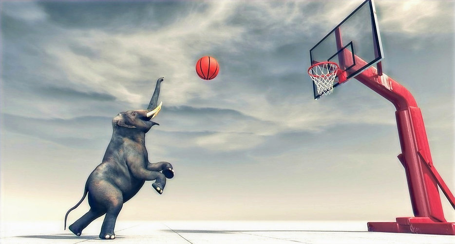 Elephant%2520playing%2520basketball_edit