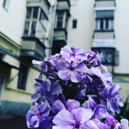 Через цветы.jpg