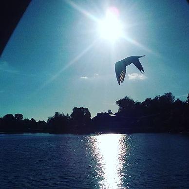 Птица, летящая над Келаркой с фотошопом.