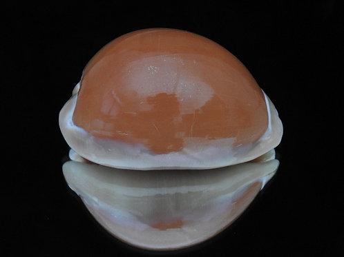 Cypraea aurantium 93.3mm