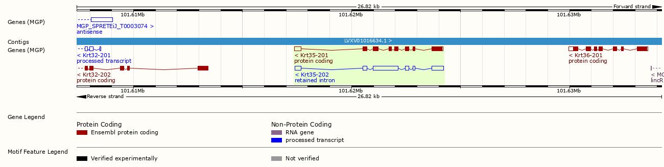 Gene Analysis-ENSEMBL.png