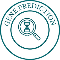 Gene Prediction-01-01.png