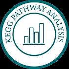KEGG Pathway Analysis-01-01 (1).png