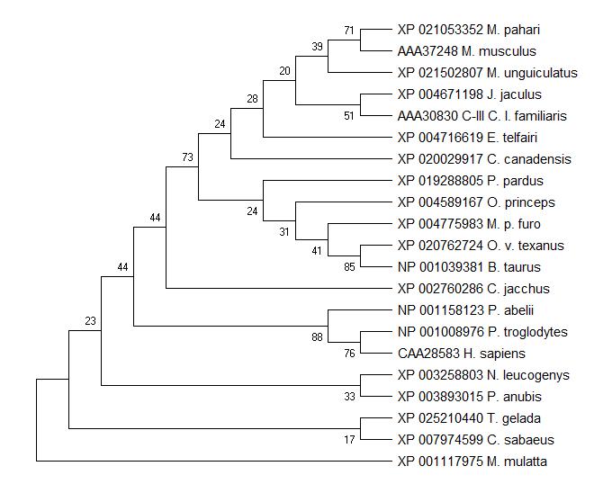 Phylogenetic Trees-Gene Trees (9).png