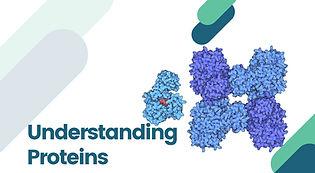 Understanding Proteins (1).jpg