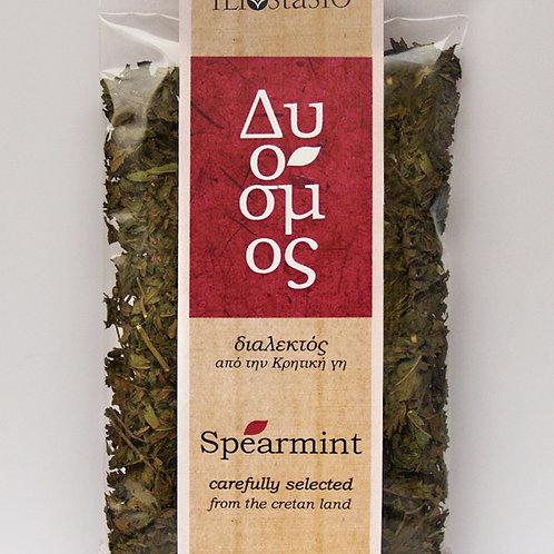 Spearmint - Aarmunt (Mentha piperita)